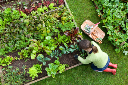 Starting A Vegetable Garden From Scratch