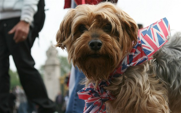 Can Having A Dog In London Really Work?