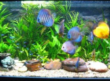 I Have Just Setup My Tropical Fish Tank, Now What?