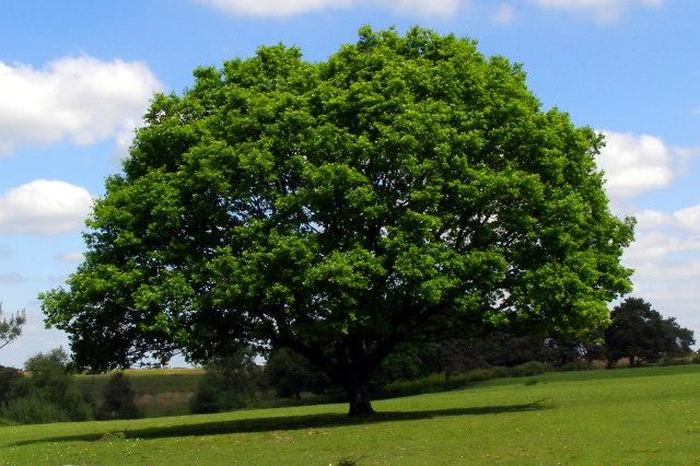 Can Copper Nails Really Kill A Tree?