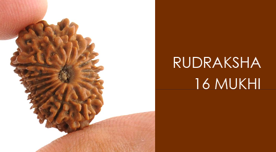 Rudraksha: Panacea For Every Type Of Evil That Exists