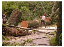Questions To Ask Before Hiring A Tree Care Specialist