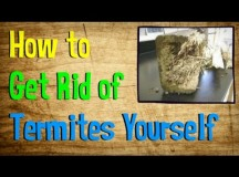 How To Treat Termites Yourself