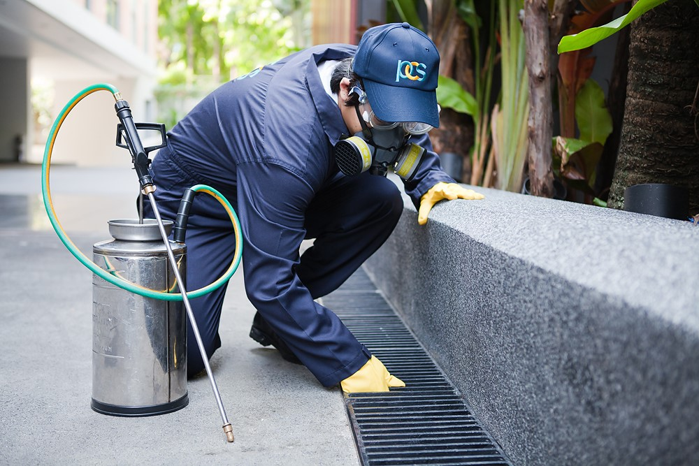 Reasons Behind Taking The Services Of Pest Controllers London