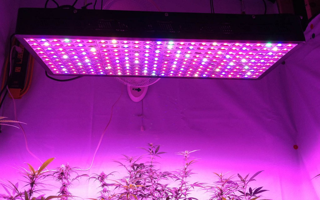Eliminate Spider Mites With LED Grow Lights
