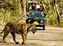 Wildlife Sanctuaries Near Delhi You Must Visit