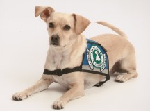 Differences between service dogs and emotional support dogs