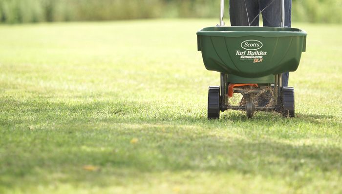 Things To Remember While Choosing Grass Seed For Your Lawn
