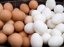 Is Egg Distribution A Potential Section Of Commercial Ventures?