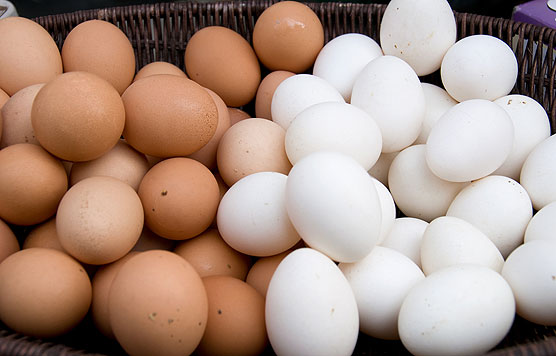 Is Egg Distribution A Potential Section Of Commercial Ventures
