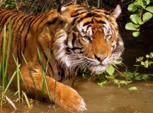 Amazing Facts About Sundarban That Everyone Must Know