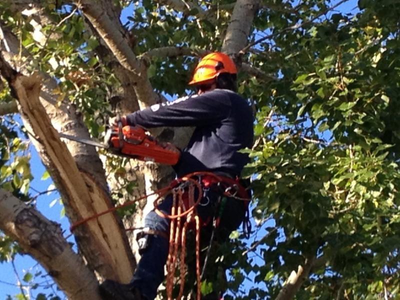 Arborist Calgary In Alberta Region