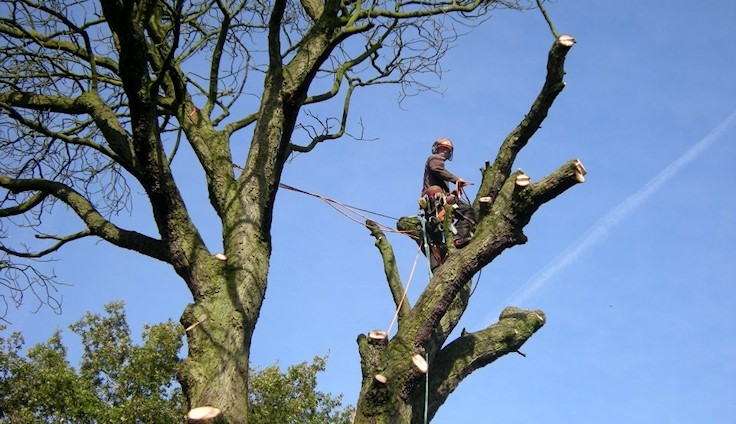 Types Of Services Provided By Tree Surgeons Essex!
