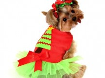 Cute Little Dog Costumes For Christmas – A Buyer's Guide