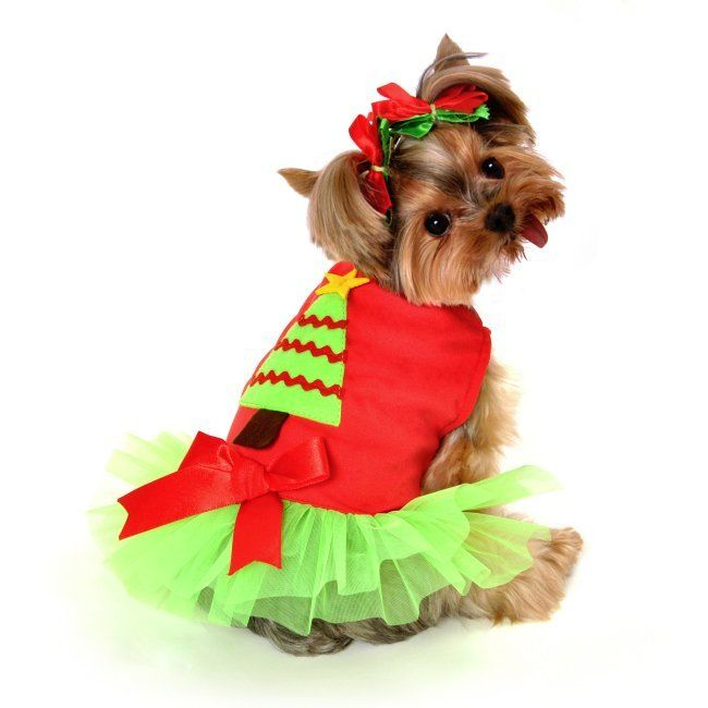 sc 1 st  DrewDalyOnline.com & Cute Little Dog Costumes For Christmas u2013 A Buyeru0027s Guide