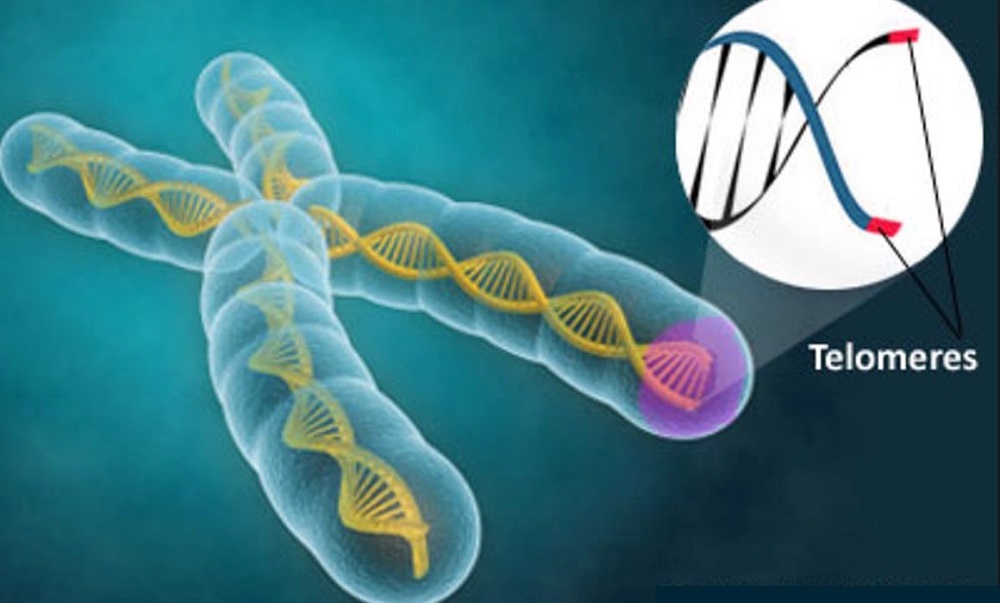 Find Out More On How To Help Your Telomeres