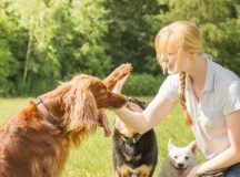 Is Training Your Dog Necessary?