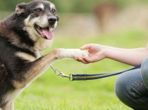 The Training That Will Make Your Pet Obedient