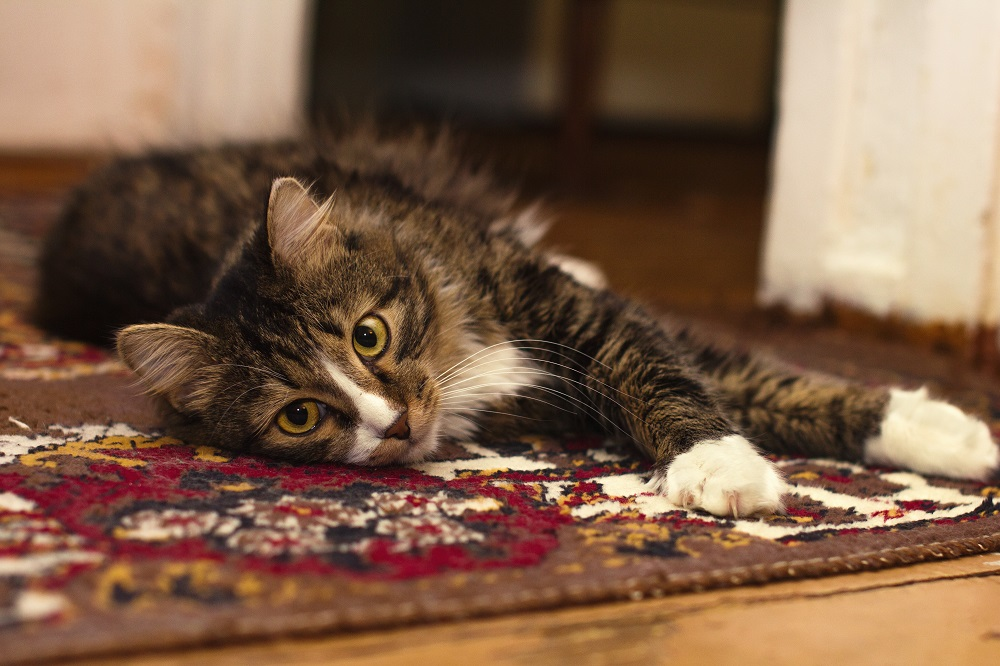 Useful Tips To Get Rid Of Flea In Your Carpet