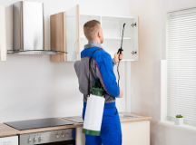 Consider About Proper Pest Control In Your Lodging Business