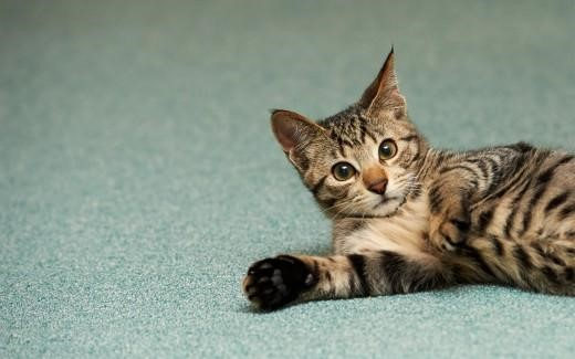 Tips To Stop Your Cat Peeing On Your Carpet
