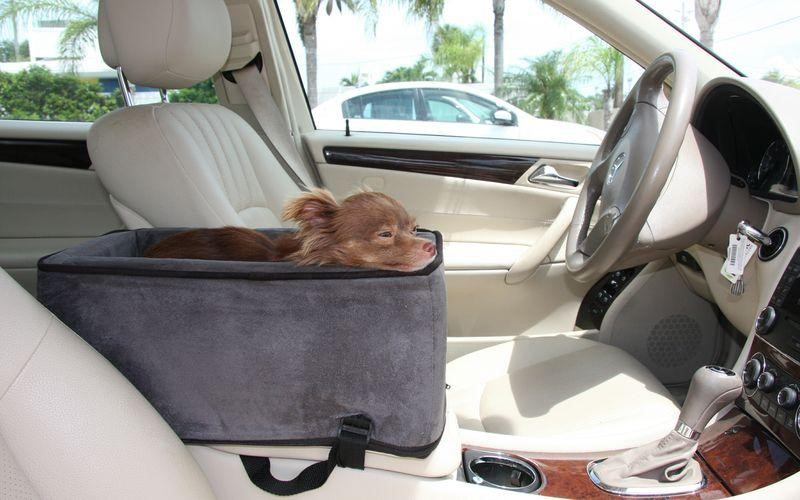 What Is The Need To Have The Best Dog Seat Belt