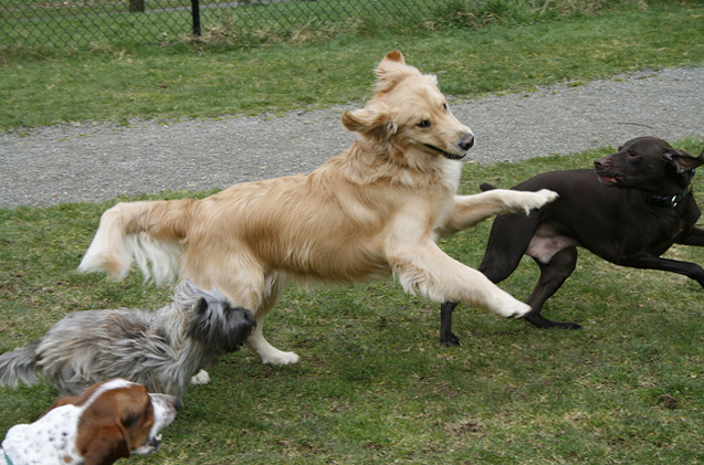 The Importance Of Choosing A Doggy Daycare