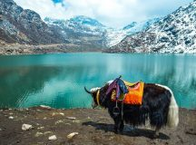 Top Hill Stations in India for Mountain Lovers