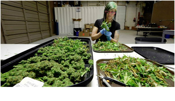 Is There Money to Be Made in Medicinal Cannabis?