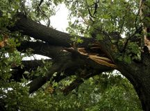 8 Reasons To Choose Professional Tree Removal Services