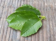Research on Kratom Effects
