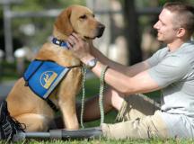 Emotional Support Dog 101