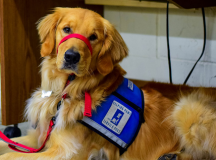 How to Prepare Your Emotional Support Dog for Flying