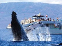Book a Wonderful Whale Watching Tour