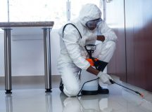 What to do before hiring a pest control operator