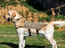 Amazing Service Dogs help the Disabled